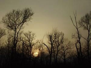 Lobau vor Sonnenuntergang