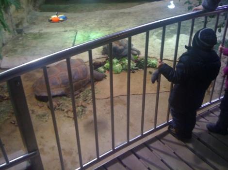 Simon bewundert die Riesenschildkröten - er liebt diese Tierchen...
