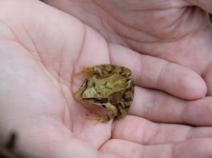 Besser ein Frosch in der Hand als eine Meise. Oder so.