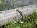 Austrian Wildlife 2.