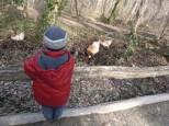 Simon und die Hühner