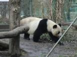 Panda-Wanda. Rer.