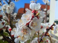 Frühling 2012 (1)