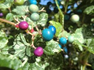 Ein Beerenbusch mit unterschiedlichen Beeren darauf.