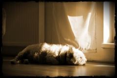 Odie als Sonnenanbeter