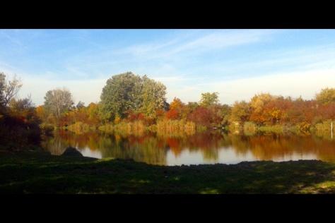 Herbst in der Lobau